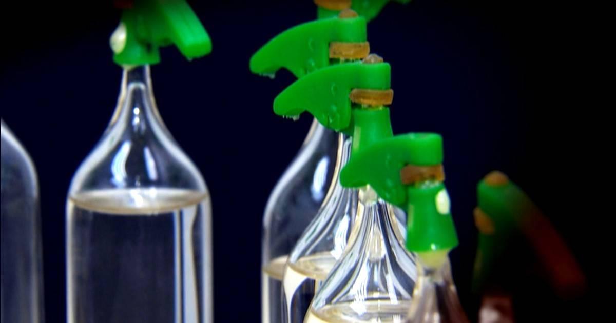 Loló e Lança Perfume Redução de danos e riscos perigos e danos
