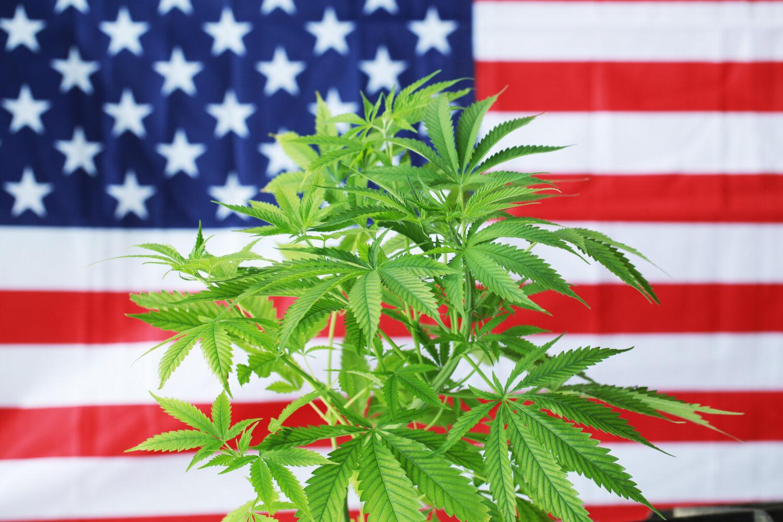 Alabama inicia discussão para legalizar maconha medicinal no alabama