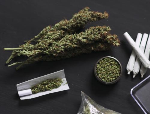 maconha sem cheiro cannabis