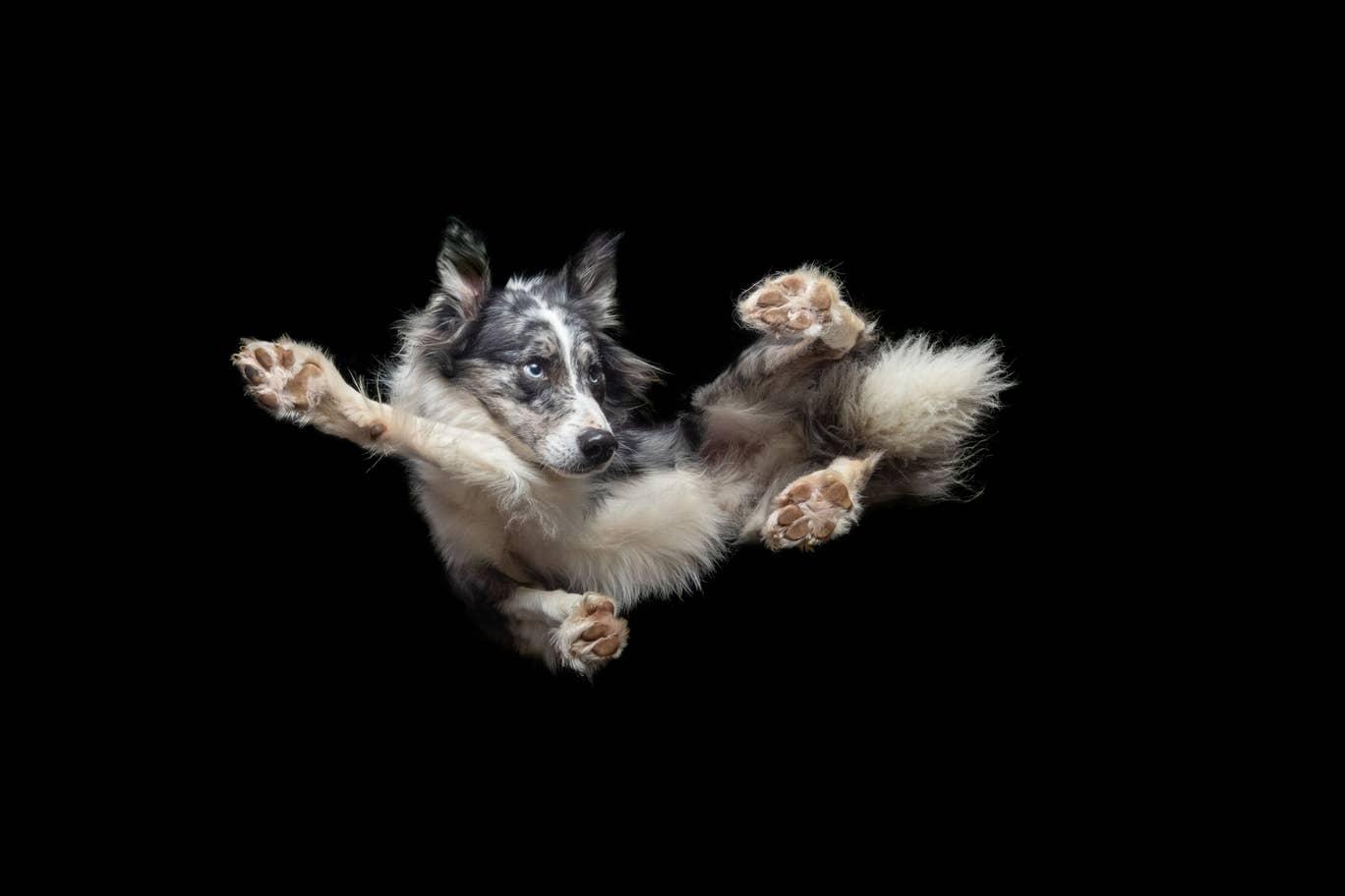 cachorros fotos ensaio fotográfico