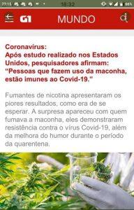 maconha cura coronavírus imune a covid19 portal mundo