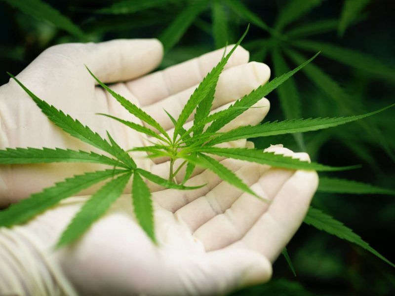 cbd e covid-19 portal mundo dr. cannabis